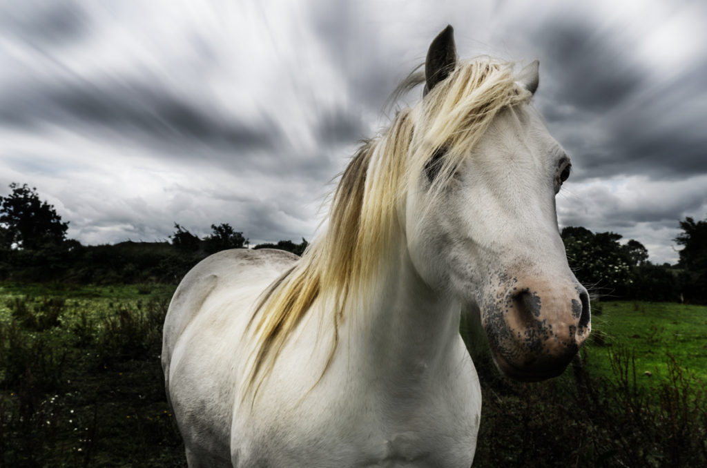 How to Use Photoshop to Create a Dramatic Scene - Example: The Hair Model Horse