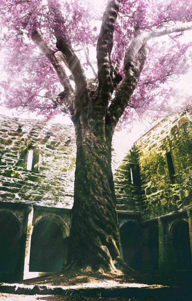 How to Use Photoshop to Create Magic - The Magic Tree   Photoshop Tutorial