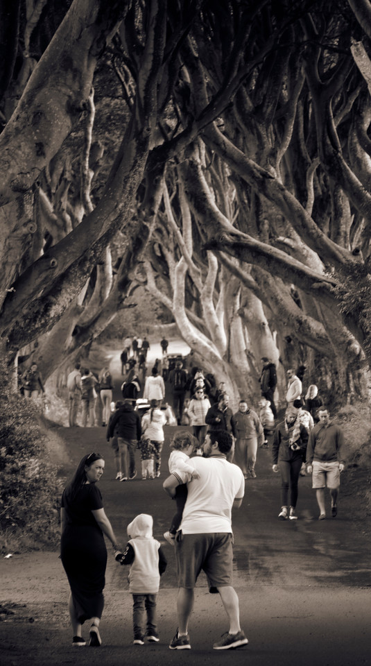 ireland landscape the dark hedges game of thrones got