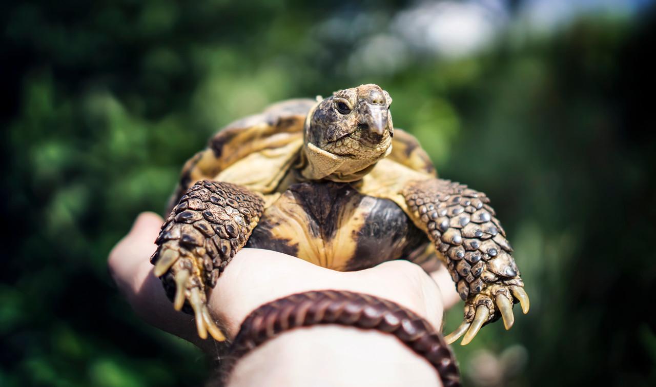 weekly photo turtle animal photography
