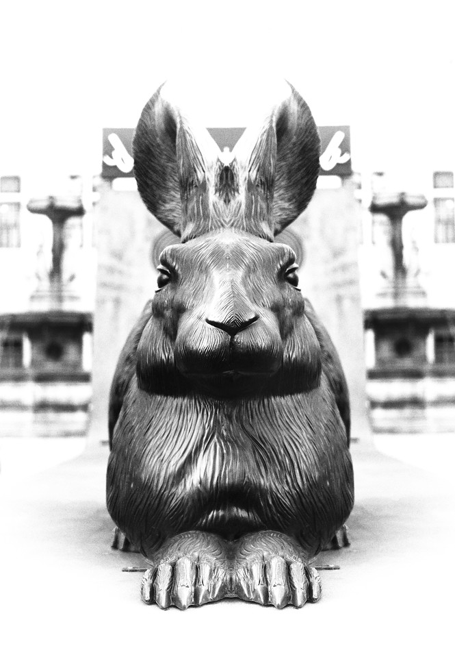 vienna, europe, photography, letsimage, phillip glombik, urban, architecture, bunny, rabbit, animal, mammal, black and white, city, bw, b and w, portrait