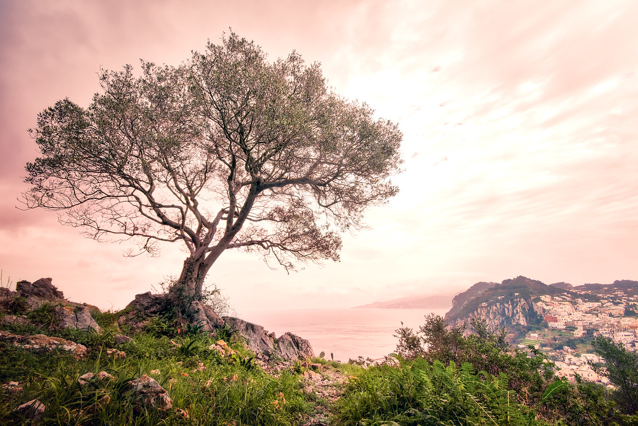 italy, capri, amalfi, italien, italiano, landscape, nature, tree, coast, water, sea, ocean, day, art, wide, grass, stones, city, high, purple, letsimage, phillip glombik, zen, meditation, chinese, travel photography